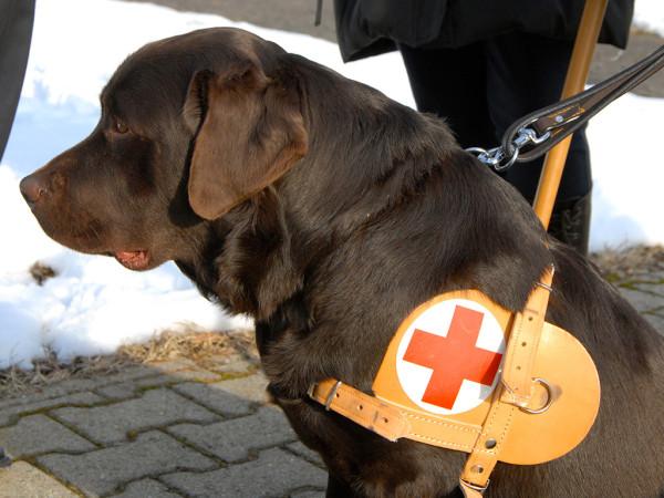 Un cane per un non vedente diabetico